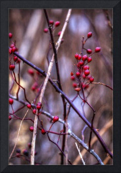 New Years Day at Sugarcreek by Jim Crotty 1