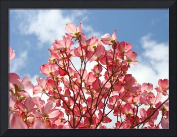 DOGWOODS FLOWERING Trees Blue Sky Clouds
