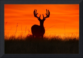 Buck Silhouette at Sunset - landscape