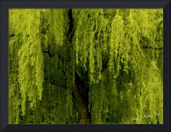 Enchanting Weeping Willow Tree Landscape Wall Art