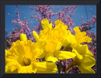 Daffodil Nature Spring Art Prints Pink Blossoms