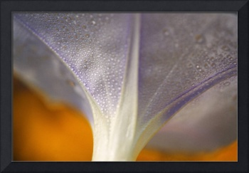 Underside Of A Flower Blossom With Dew