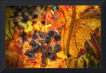 Grapes Special Effects