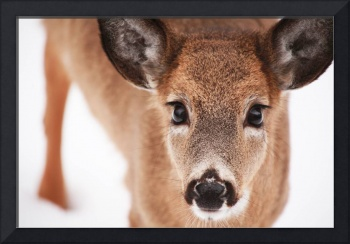 Big Deer Eyes