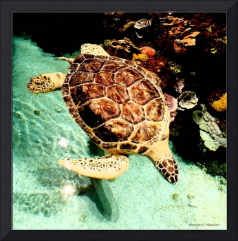 Turtle in the Water