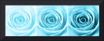 Turquoise Rose with Water Droplets Triptych