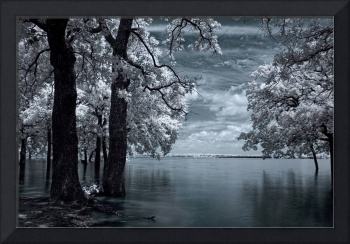 Inside - Infrared Tree Landscape