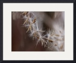 Macro Ornamental Grass IMG_2673 by Jacque Alameddine