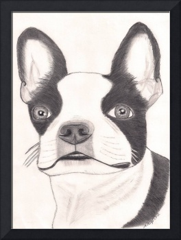Boston Terrier fine art portrait
