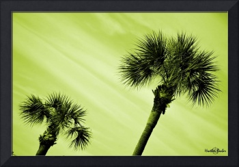 Palm Trees in Green