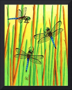 The Dragonfly Meeting