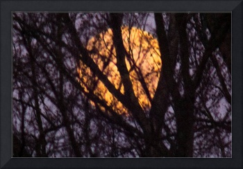 Full Moon behind tree, Ohio