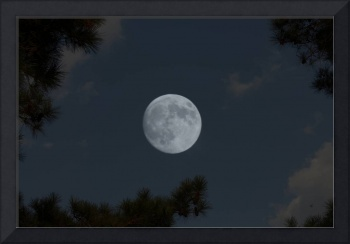 Piney Woods Moon