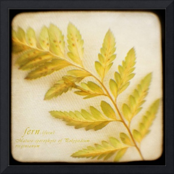 Green and Gold Fern