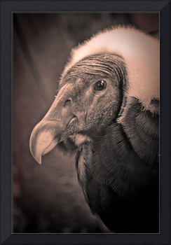 Condor doing his best Peter Lorre impersonation