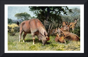 The Common Eland