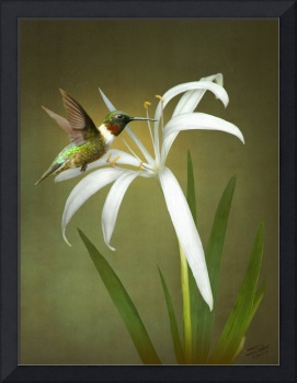Hummingbird and Wild Swamp Lily
