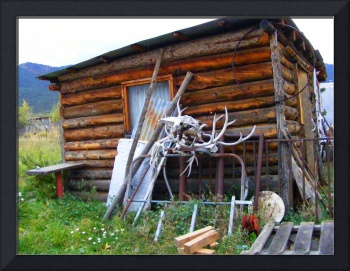 New Mexico shed and antlers