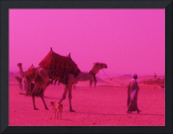camel in pink