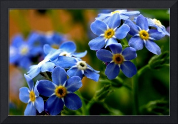 WOOD-FORGET-ME-NOT BLUE FLOWER BOUQUET