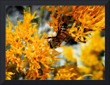 FLOWER BEE Photographic Art Greeting Cards