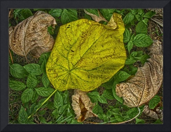 BIG YELLOW LEAF, EDIT D
