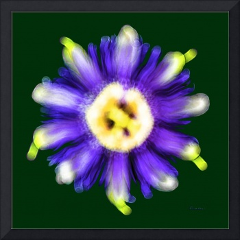 Abstract Passion Flower Violet Blue Green 002g