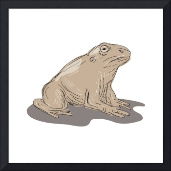 Toad Frog Sitting Side Drawing
