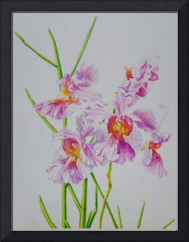 Painting of Orchid Flower, by Debbie Teo