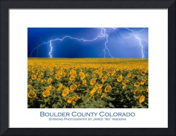 Boulder County Sunflower Lightning