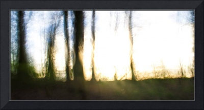 the woods at dusk