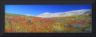 Wildflowers Andalucia Spain