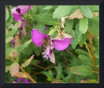 Bee Collecting Pollen From Purple Flower Oil