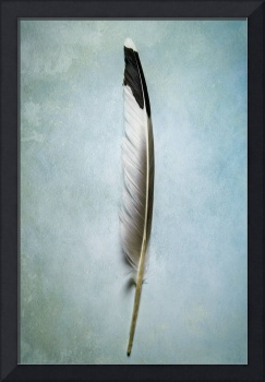 Dove feather I