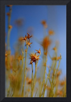 Blue Sky Orange grass
