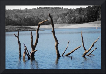 Trees in the Water-Color on B&W