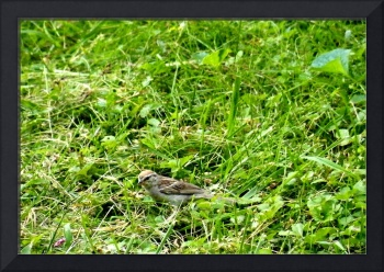Bird in the Grass