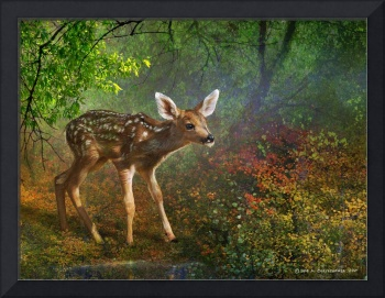 forest fawn