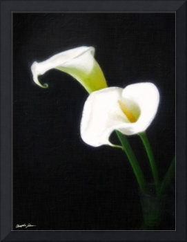 Elegant Calla Lily Flowers 1 Painterly