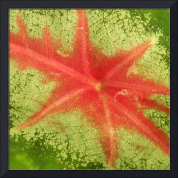 Leaf Veins in Red and Green