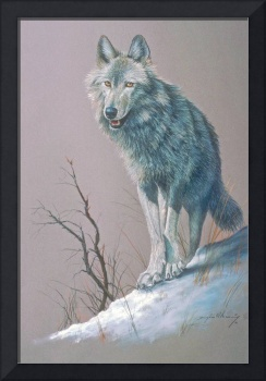 Artistic Study of a Wolf
