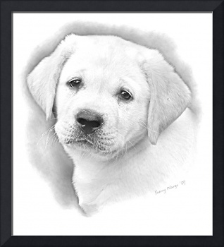Lab Puppy (Pencil)