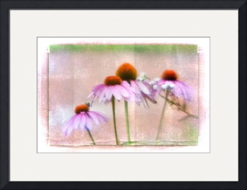 Cone Flowers (light) by D. Brent Walton