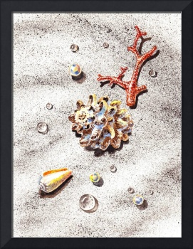 Sea Shells Corals Pearls and Waterdrops