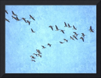 Canadian Geese in Flight - edited