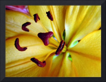 Yellow Day Lily 81a