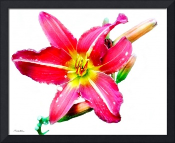 Day Lily No. Two
