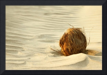 Coconut on sand