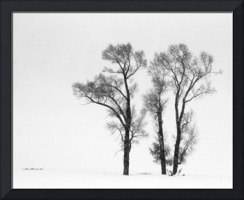 Yellowstone Trees_MG_1893.B&W
