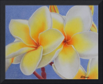 Beautiful White Plumeria